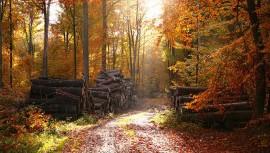 Jesenná údržba auta bez toho, aby ste museli ísť do servisu